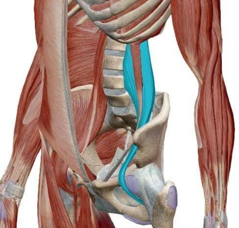 Lezione di Meccanica-Anatomica – OG: